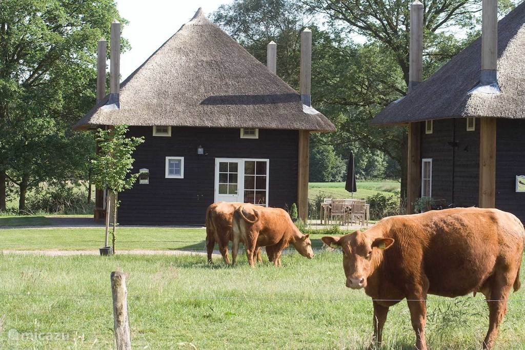 Vakantiehuis Nederland, Overijssel, Wierden - boerderij Hooiberg Slig 2