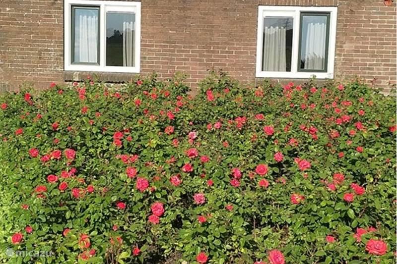 Vakantiehuis Nederland, Gelderland, Klarenbeek Vakantiehuis Het Veluuws vakantiehuisje