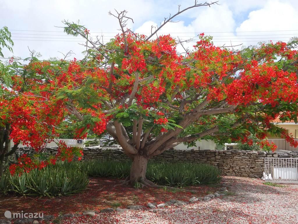 Vacation rental Bonaire, Bonaire, Santa Barbara Villa Kas Buriku