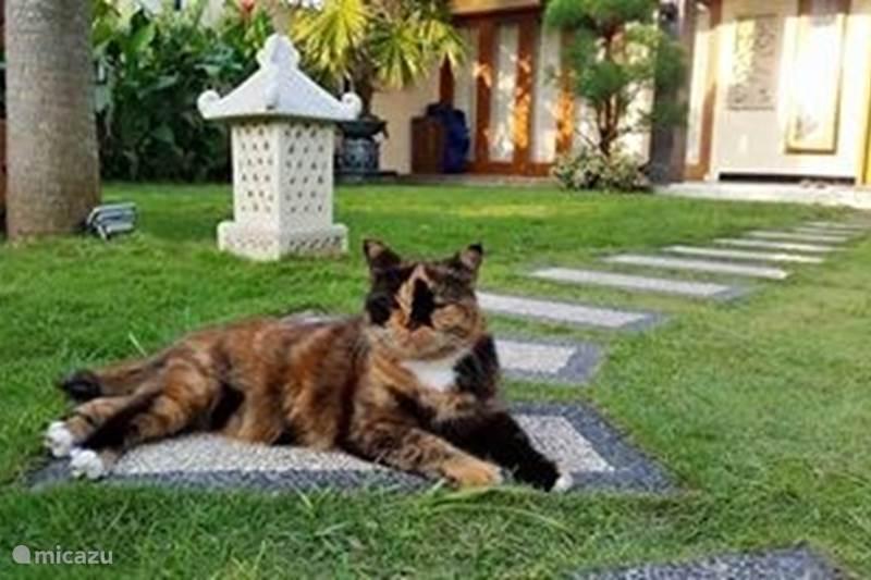 Vakantiehuis Indonesië, Java, Yogyakarta Villa Villa Rosseno-Evelyn (logies)