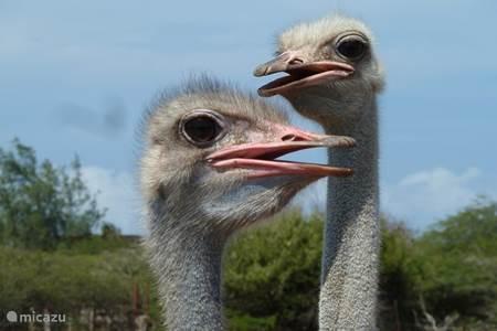 Ostrich park