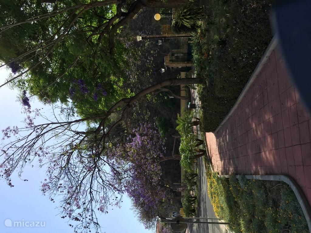 Voorkant van de 'urbanisatie' met heerlijk geurende bloemen, bomen en planten