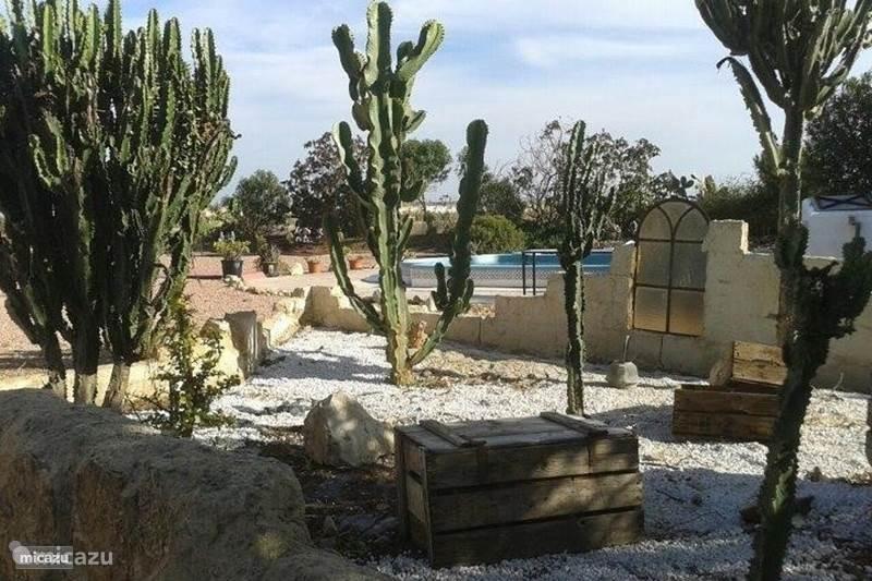 Cactus tuin bij het appartement