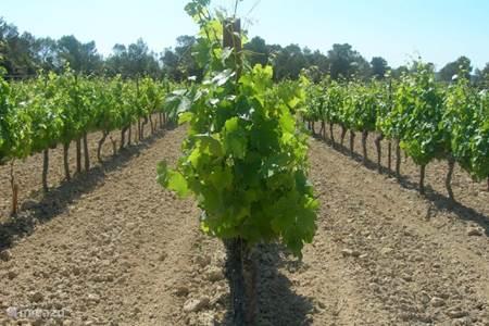 Wijnranken rond Parc le Duc