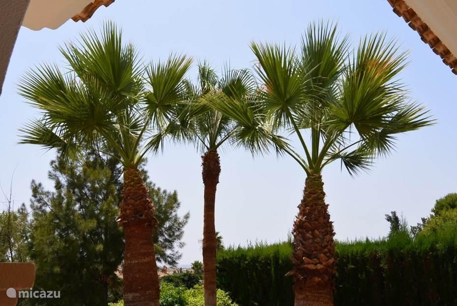 Gesnoeide palmen in het najaar