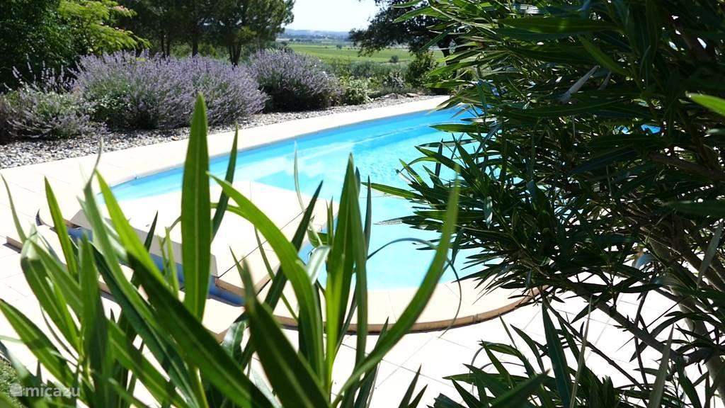 Zwembad in het groen