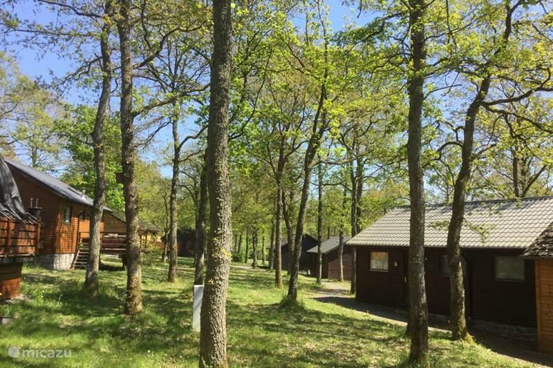 Ferienwohnung Belgien, Ardennen, Durbuy Chalet Genieterke