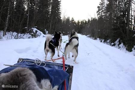 Trip in de hondenslee