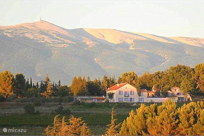 Vakantiehuis Frankrijk, Vaucluse, Mazan Glamping / Safaritent / Yurt Safaritent Acacia