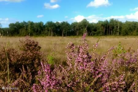 Gorsselse Heide
