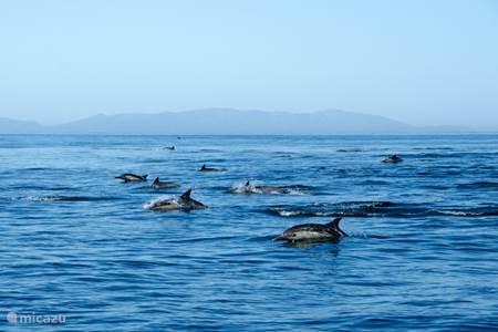Dolfijnen bekijken