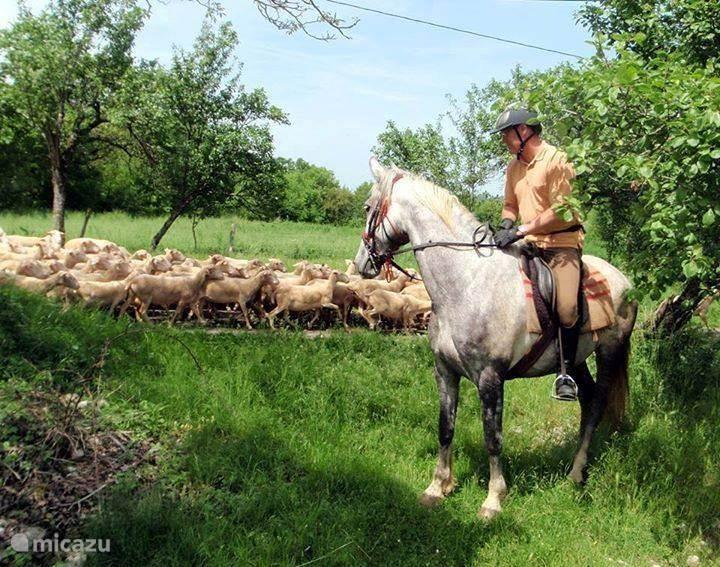 Paardrijden bij Centre Equestre du Passe-Temps