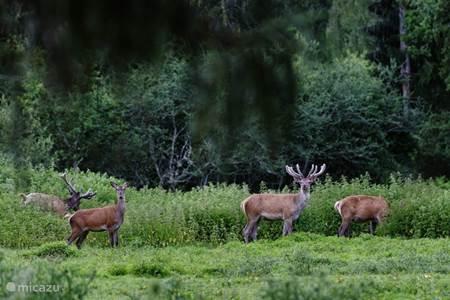 natuurpark Treigny