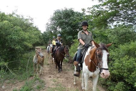 Paardrijden vanaf het reservaat