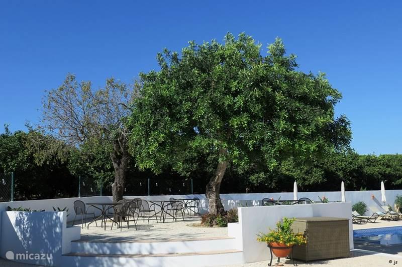 Vakantiehuis Portugal, Algarve, Pata De Baixo Villa Quinta Bela Vida