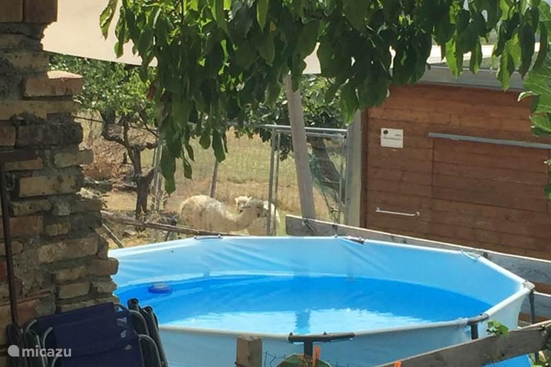 Vakantiehuis Italië, Abruzzen, Guardiagrele Vakantiehuis Alpaca casa