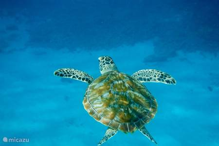 Snorkelen in Blue Bay is fantastisch!