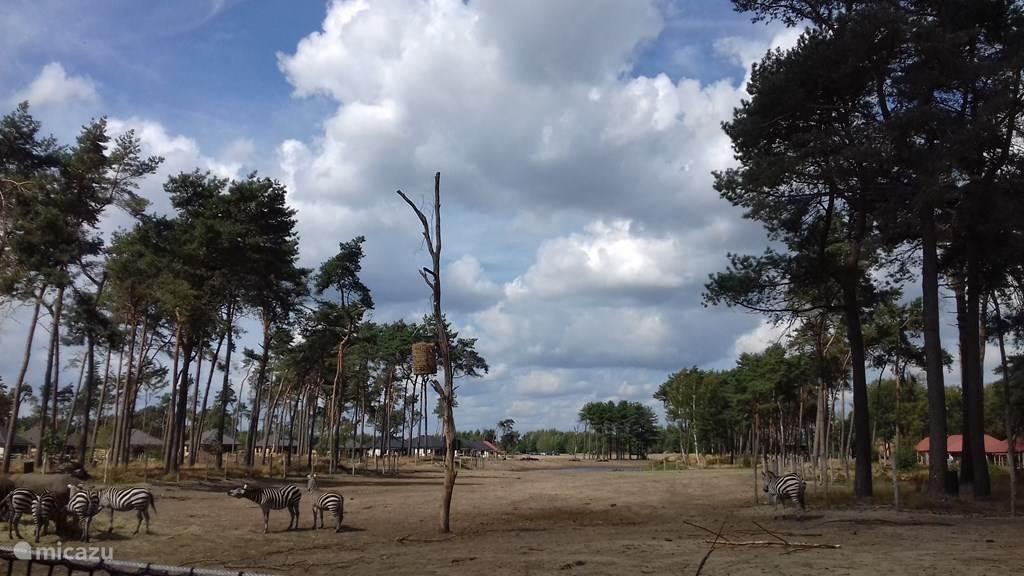 Vakantiehuis Nederland, Noord-Brabant, Hilvarenbeek Stacaravan Botswana 232