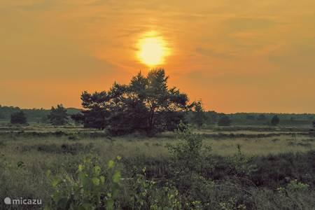 Bosrijke omgeving De Veluwe