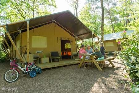 Vakantiehuis Nederland, Gelderland, Nunspeet glamping / safaritent / yurt Safaritent Glamping Nunspeet