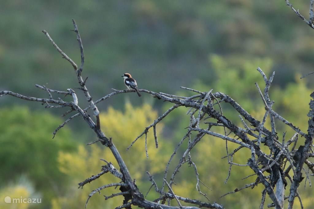 Vogels kijken vanaf het terras