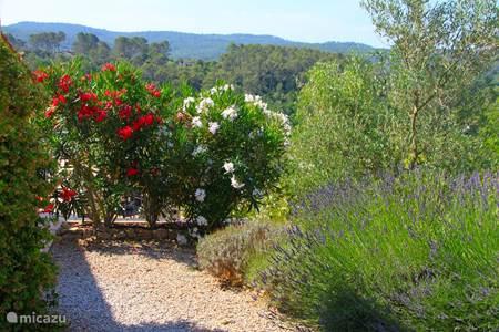 Verzorgde tuin