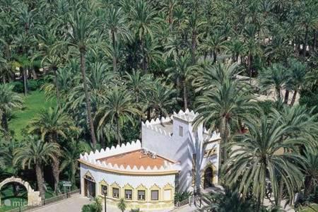 elche stad met prachtig palmenbos