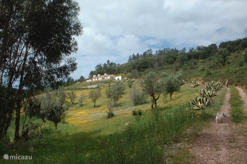 Vakantiehuis Portugal, Alentejo, São Luis Vakantiehuis Monte Cerro da Vigia