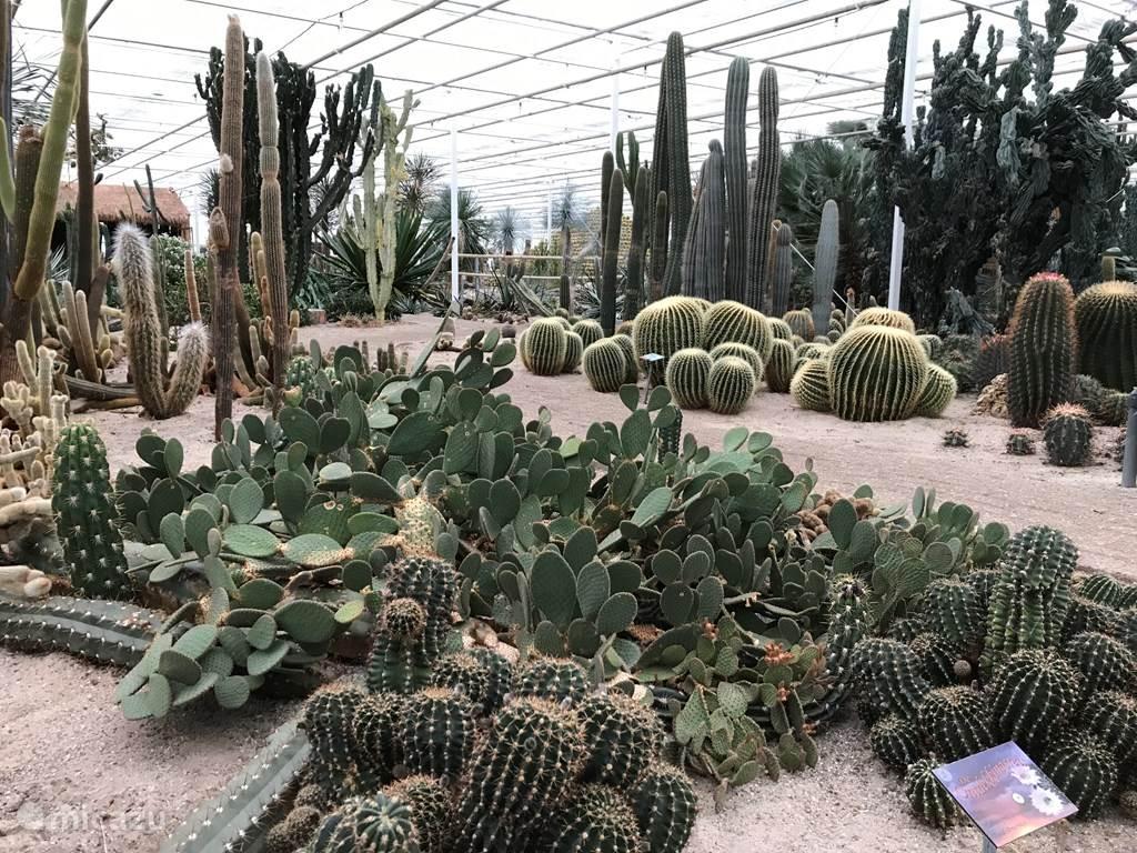 Cactus Oase Annie