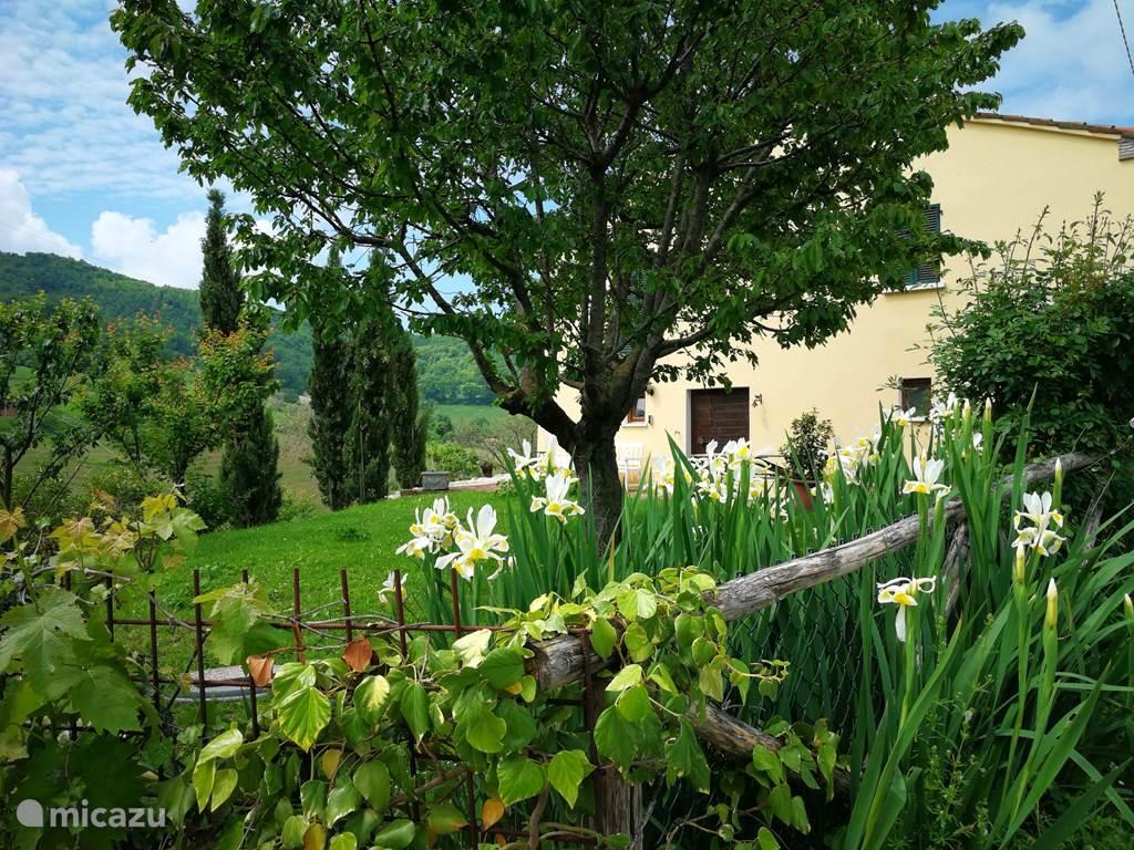 Vakantiehuis Italië, Marche, Fossombrone vakantiehuis Appartement Rosmarino