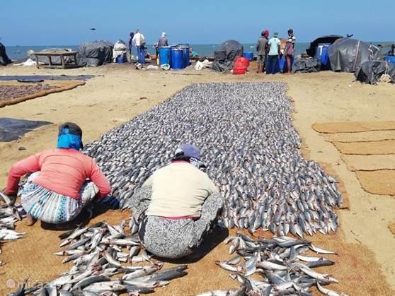 Nigambo Lagoon en Fish Market