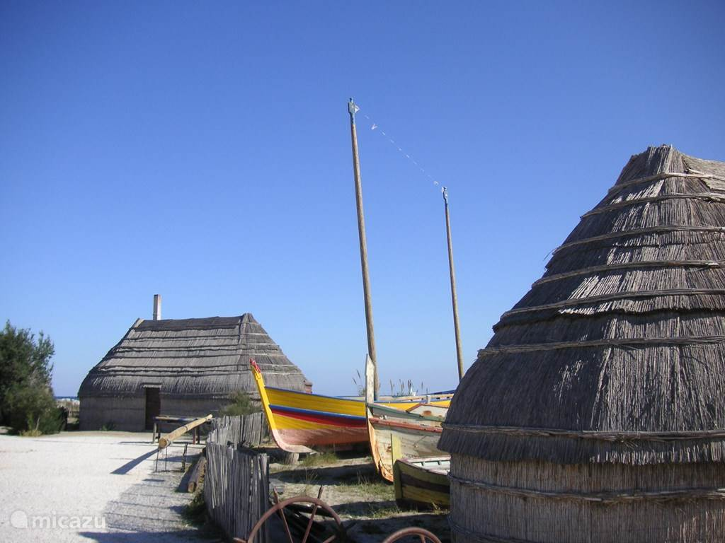 The fish market in the port of Barcarès