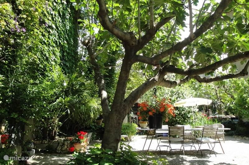 Vakantiehuis Frankrijk, Hérault, Beaufort Bed & Breakfast B&B Maison Chabbert - kamer St Côme