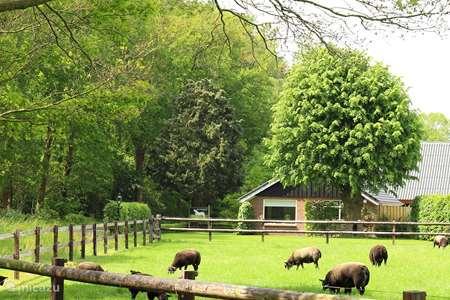 Vakantiehuis Nederland, Overijssel, Lemelerveld vakantiehuis Erve Heidepark