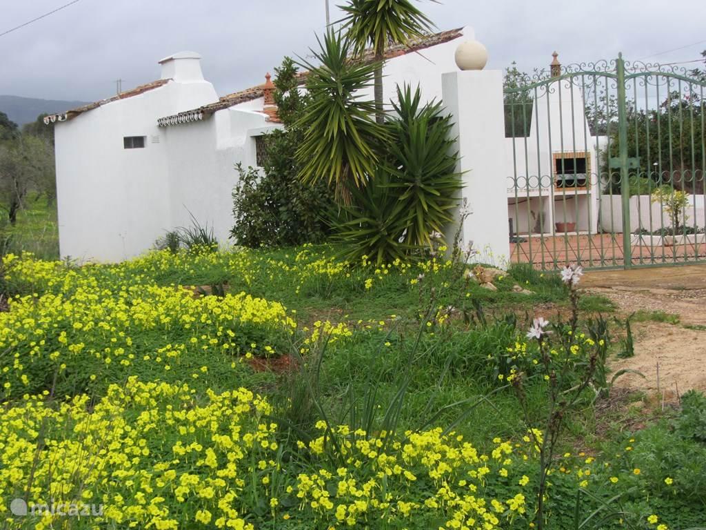 Vakantiehuis Portugal, Algarve, Quelfes vakantiehuis Casa Saskia