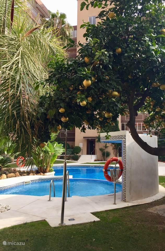 Vakantiehuis Spanje, Costa del Sol, Mijas Costa - appartement Appartement Palm Beach
