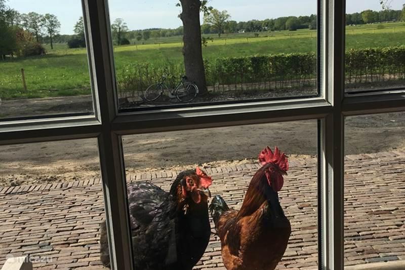 Vakantiehuis Nederland, Gelderland, Epe Blokhut / Lodge The Barn, rust, natuur en uitzicht
