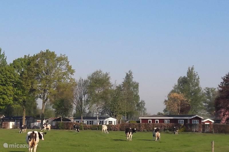 Vakantiehuis Nederland, Utrecht, Renswoude Chalet L-chalet E035