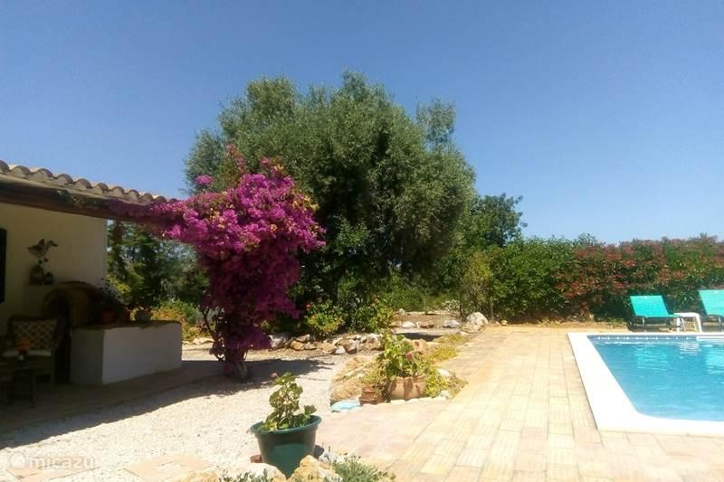 Vakantiehuis Portugal, Algarve, Tavira Vakantiehuis Casa do Vale