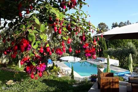 Vakantiehuis Portugal, Coimbra, Mouronho - bed & breakfast B&B Porturama 4 pers.kamer (max)