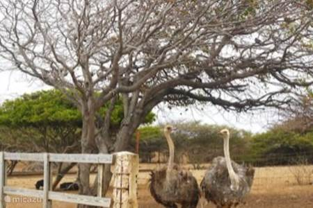 Vogels kijken bij de Struisvogel Farm