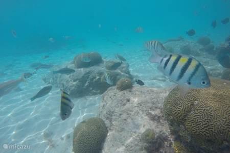 5x de mooiste spots om te snorkelen op Curacao
