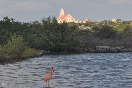 Flamingos 5 min drive from Barku di Bela