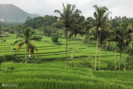 Schitterende rijstvelden