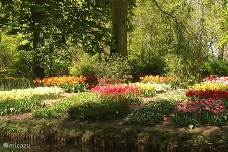 Kom de prachtige tulpen in april bekijken