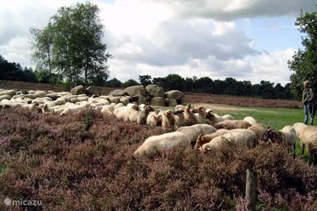 Drenthe national park