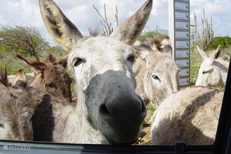 The Donkey Sanctuary