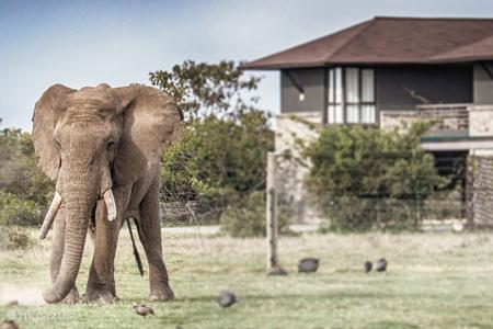 Ferienwohnung Kenia – villa Mount Kenya Wild Life Estate