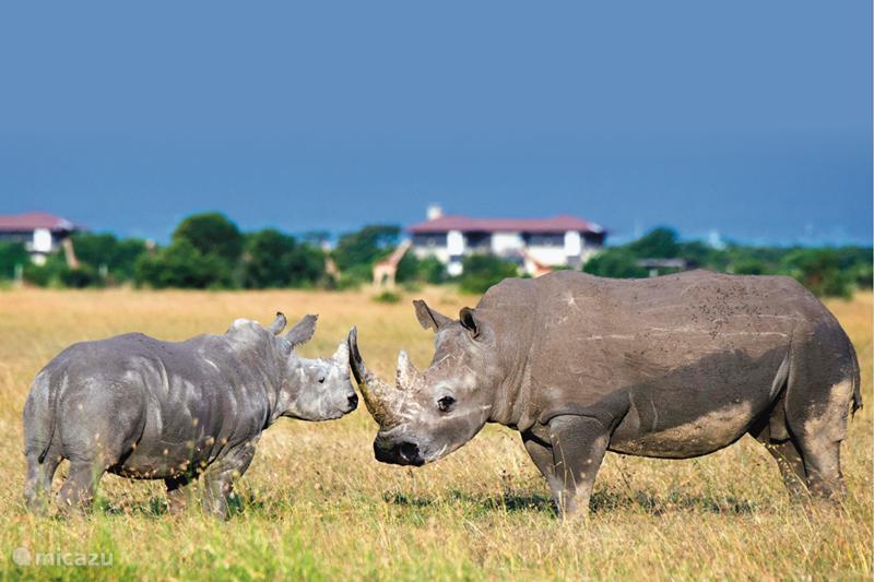 Vakantiehuis Kenia, Wildparken, OL Pejeta Villa Mount Kenya Wild Life Estate