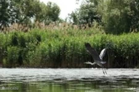 Tisza meer